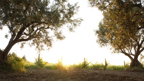 Dawn rising over Melen Winery